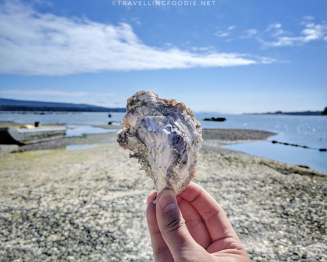 12 Things To Do for BC Shellfish and Seafood Festival 2017 in Comox Valley