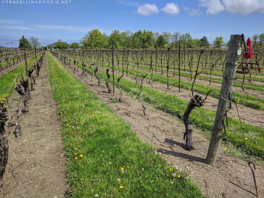 15 Wineries in Niagara-on-the-Lake, Ontario: A Day of Winery Hopping
